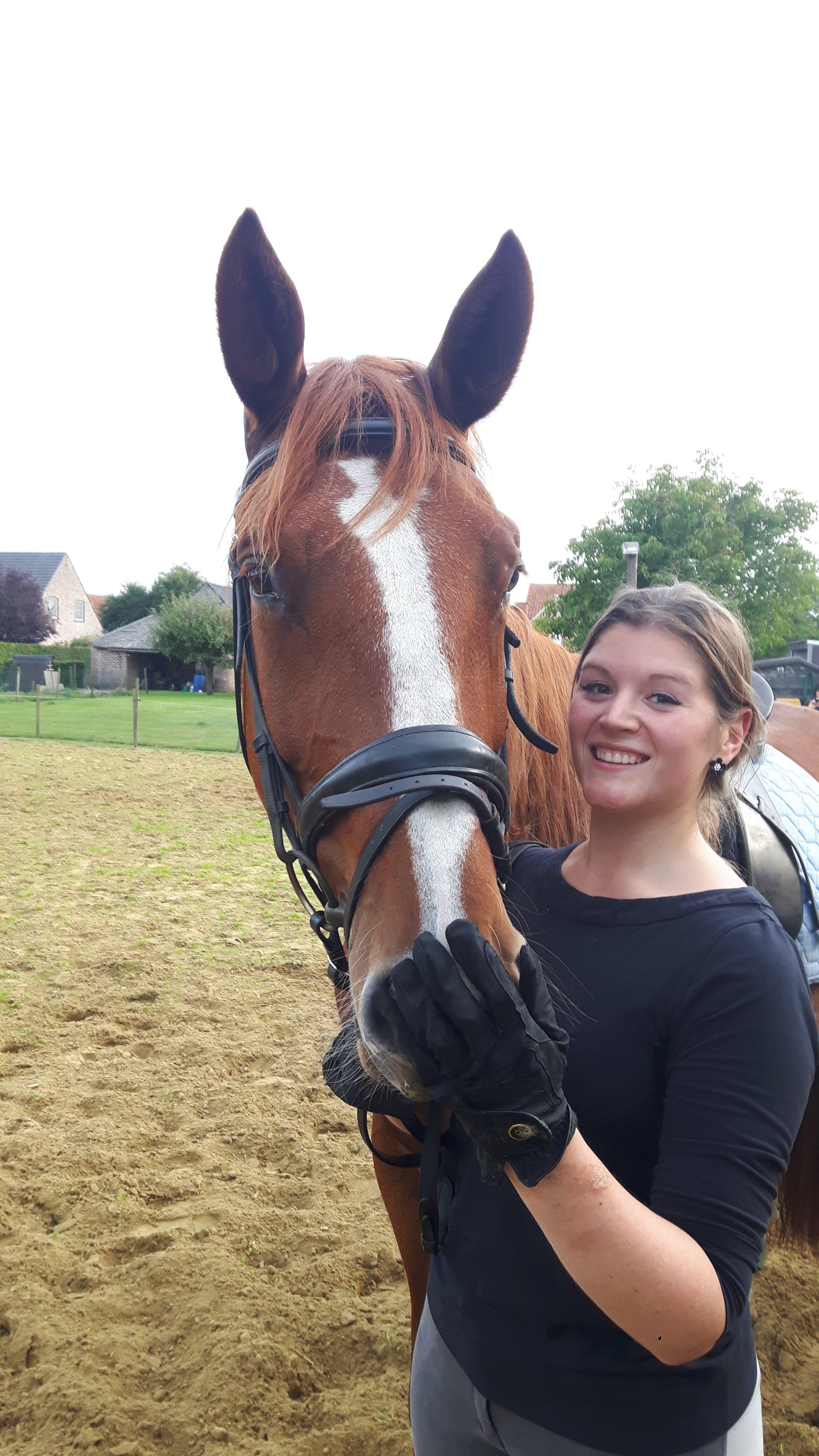 Horseback Riding, Horses Dressage, Music History, Music Theory, Guitar, English Adults, English as Second Language (ESL), English Students in Stekene, Belgique
